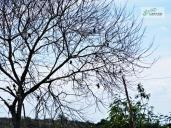 Zona rural de Vitória da Conquista